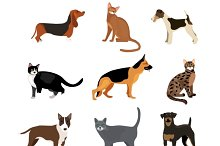 Cats and dogs vector illustration