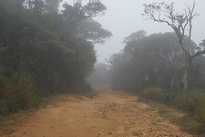 Moving along mountain path among tropical forest. Point of view walk through rainforest path. First person view of going through jungle road at foggy wet weather. POV