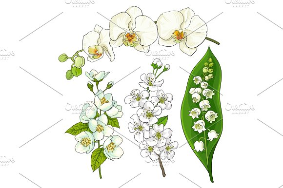 White Flowers Lily Of The Valley Orchid Apple Cherry Blossom
