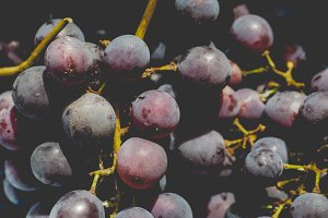 Red grape fruits, faded vintage look