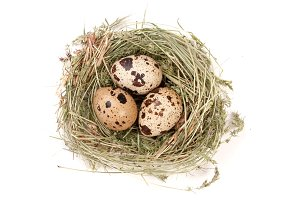 four quail eggs in a nest isolated on white background. Top view