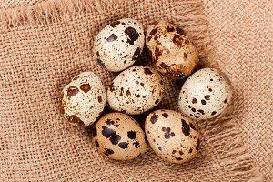 Several quail eggs on burlap. Close-up. Top view