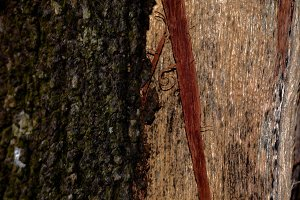 Wood Patern 2