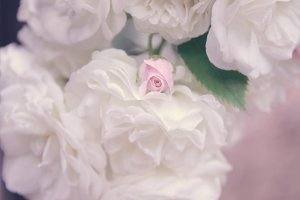 White roses, pink rose bud