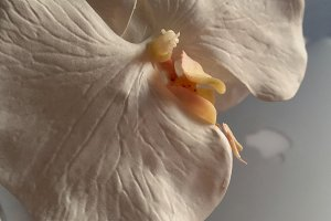 Orchid flower on back ground comp
