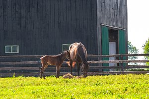 Mare with her foal.