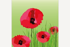 Poppy Flower Background