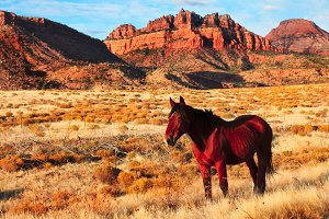 Horse in Zion National Park