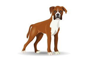 Boxer dog full length vector illustration isolated on white