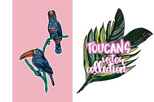 Toucan vector collection