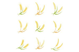 Ear spike logo badge icon wheat isolated vector.