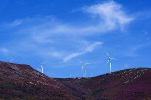 Wind Turbines on Lavender Hills