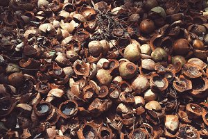 Coconuts Valley