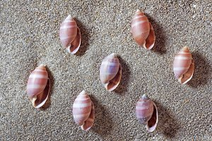 seashells in beach, shells in sand