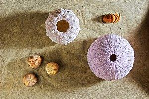 sea urchins in beach sand
