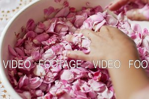Close Up of Female Hands Cupping Delicate Pink Flower Bloom in Palms