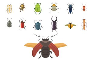 beetle flat illustrations