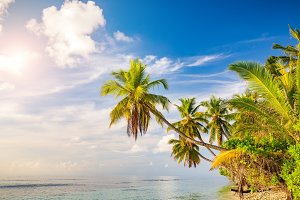 Palm trees on maldivian beach