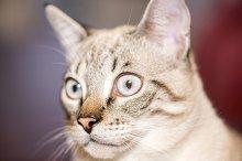 little cat posing