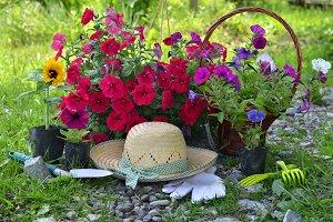 Planting flowers2