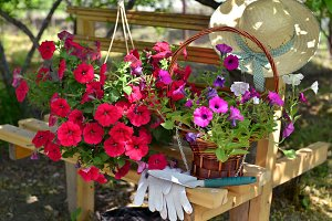 Flowers on the bench