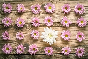 Composition of pink and white flower