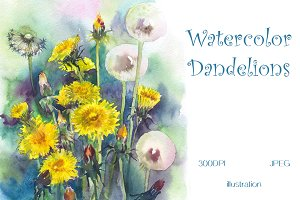 SALE! Watercolor Dandelions