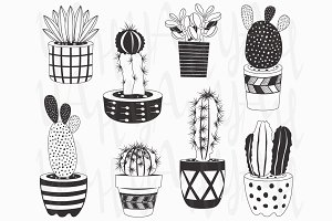Hand draw Cactuses Collections