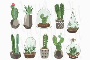 Cactus Collections