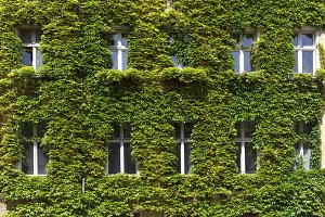 Green wall with windows