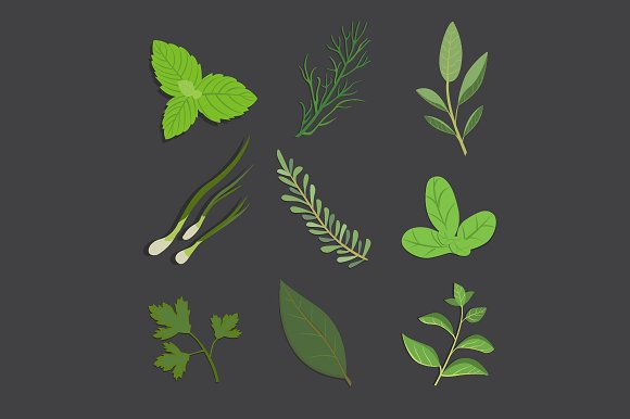herbs and spices.herbal illustration