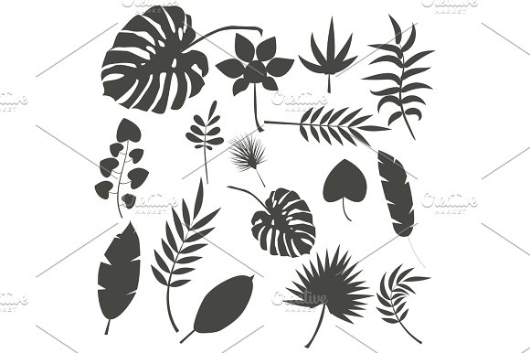 Tropical Leaves Palm Summer Exotic Jungle Green Leaf Vector Illustration