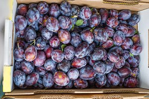 Blue or purple prune plums at the market