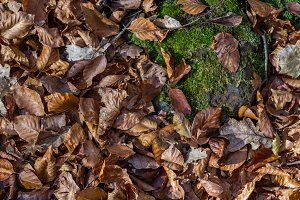 Autumm: dead leaves on the ground