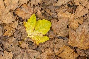 Autumm: dead leaves on the ground