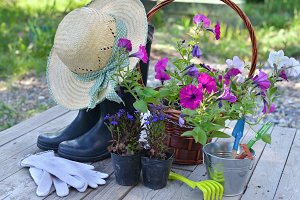 Garden still life1