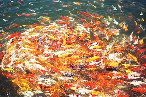 Goldfish Frenzy