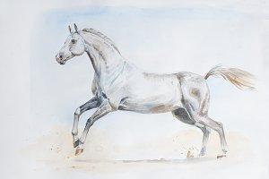 akhal-teke horse painting