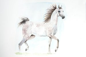 Arabian horse painting