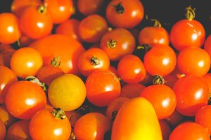 Tomatoes picture, faded vintage look