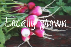 Ripe radishes. Locally Grown.