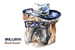 Bulldog Face. Dog hand drawn