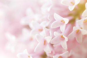 Macro of Beautiful Pink Flowers
