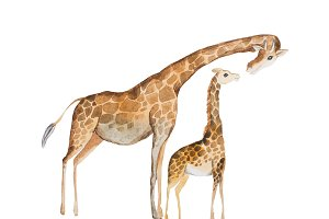Watercolor illustration of giraffe mother and baby