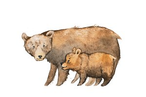 Brown bear with a baby drawn with watercolor technique