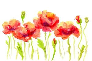 Hand Painted Watercolor Flower Poppy.