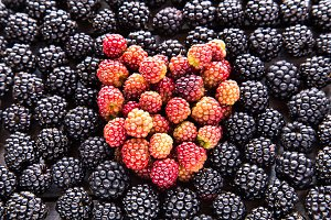 blackberries texture