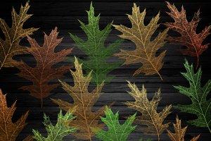 Oak Leaf Skeletons Clipart