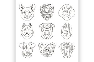 different dogs breed