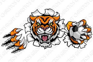 Tiger Holding Soccer Ball Breaking Background